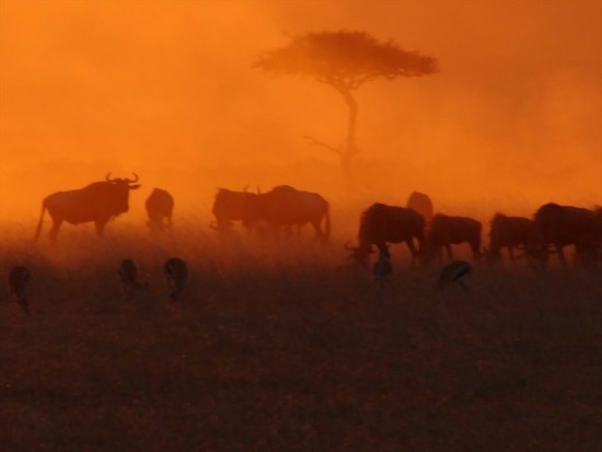 secluded safaris in africa (11)
