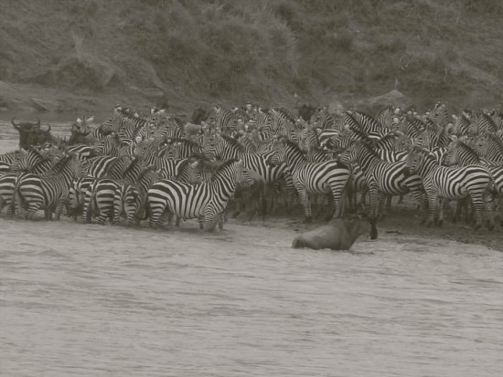 secluded safaris in africa (12)