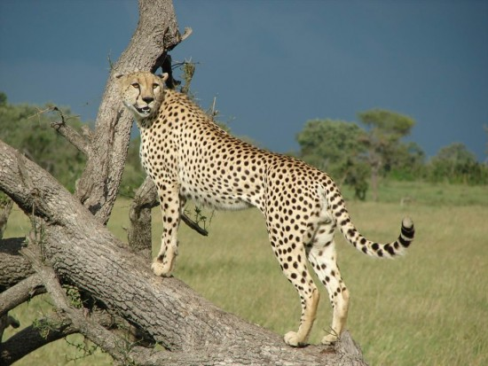 secluded safaris in africa (17)