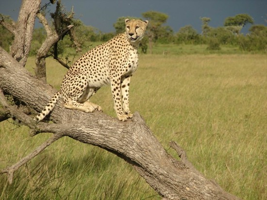 secluded safaris in africa (18)