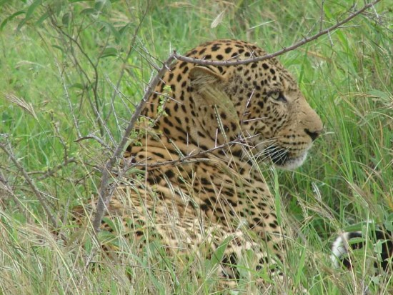 secluded safaris in africa (20)
