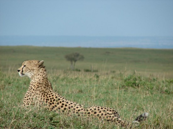 secluded safaris in africa (2)