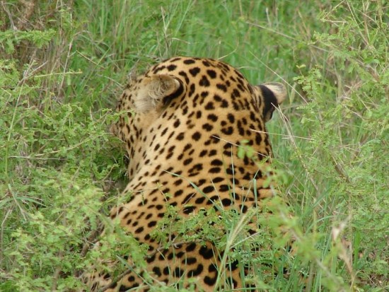 secluded safaris in africa (21)