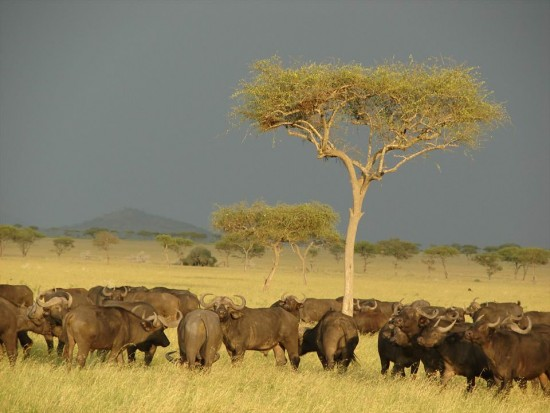 secluded safaris in africa (23)