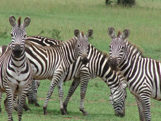 secluded safaris in africa (24)