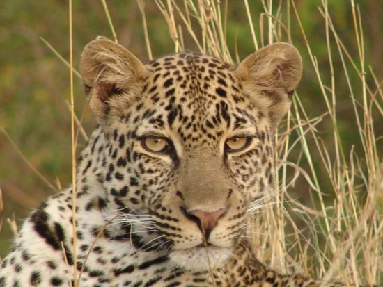 secluded safaris in africa (25)