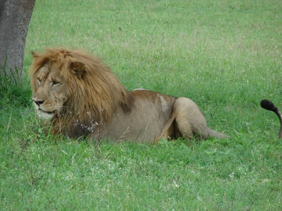 secluded safaris in africa (28)