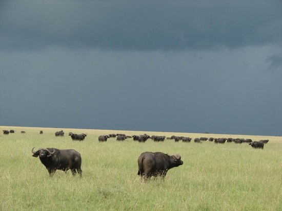 secluded safaris in africa (29)
