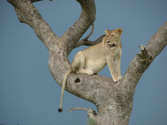 secluded safaris in africa (30)