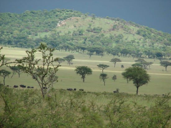 secluded safaris in africa (31)