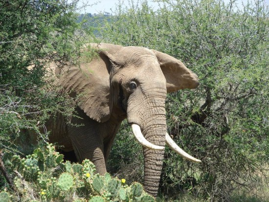 secluded safaris in africa (43)