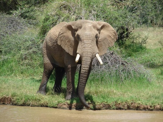 secluded safaris in africa (45)