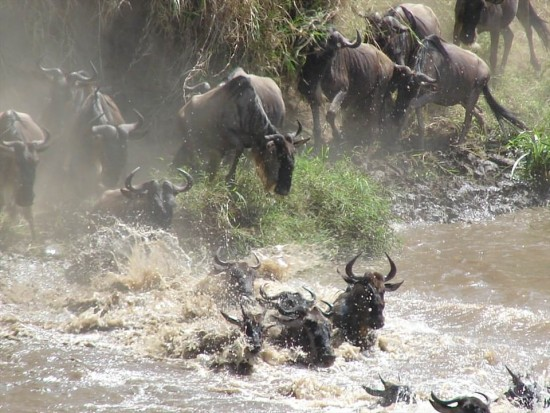 secluded safaris in africa (52)