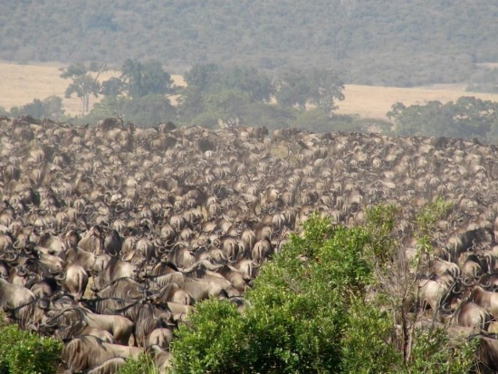 secluded safaris in africa (53)