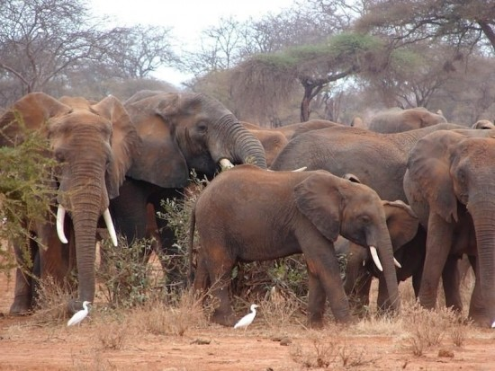 secluded safaris in africa (55)