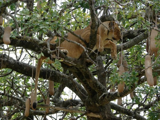 secluded safaris in africa (58)