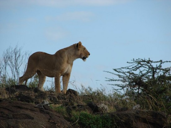 secluded safaris in africa (59)
