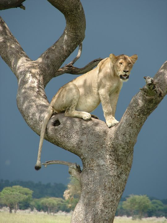 secluded safaris in africa (6)