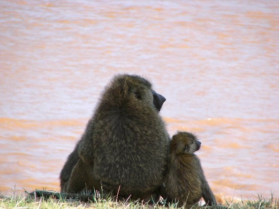 secluded safaris in africa (63)