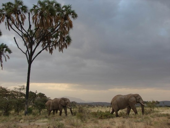 secluded safaris in africa (71)