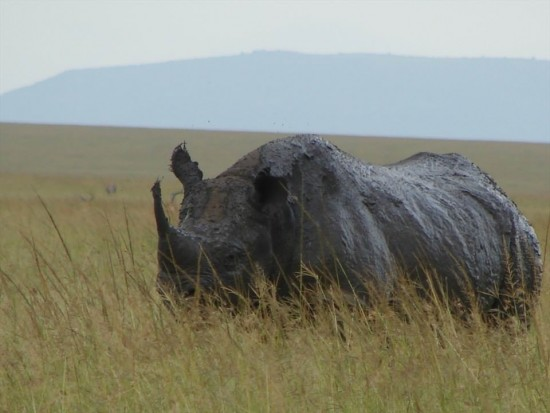 secluded safaris in africa (73)