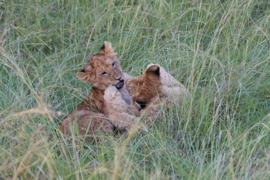 secluded safaris in africa (82)