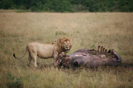 secluded safaris in africa (84)