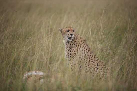 secluded safaris in africa (85)