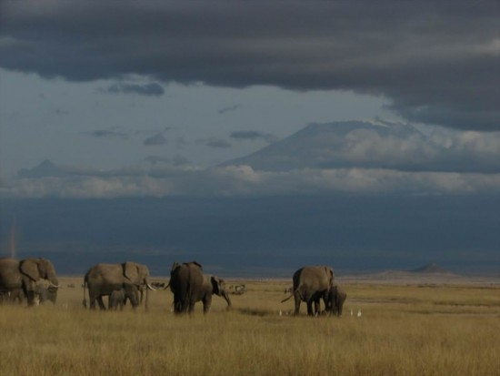 secluded safaris in africa (88)