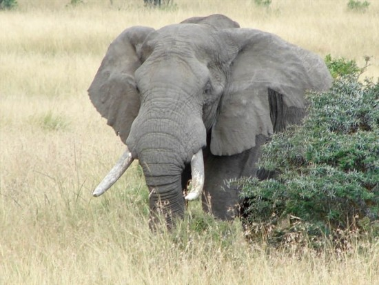 secluded safaris in africa (90)