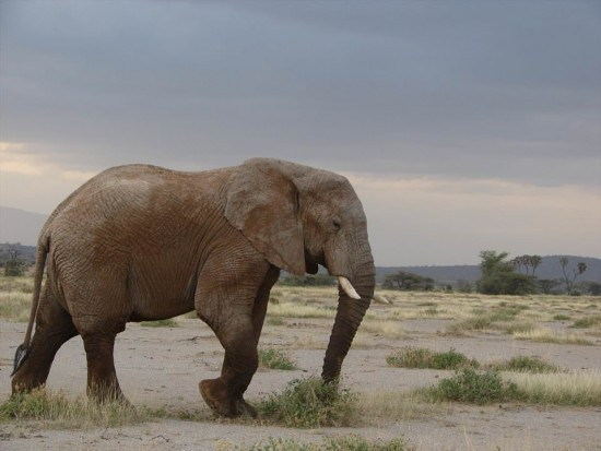 secluded safaris in africa (9)