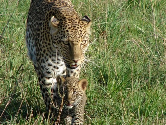 secluded safaris in africa (91)