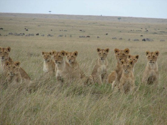 secluded safaris in africa (93)