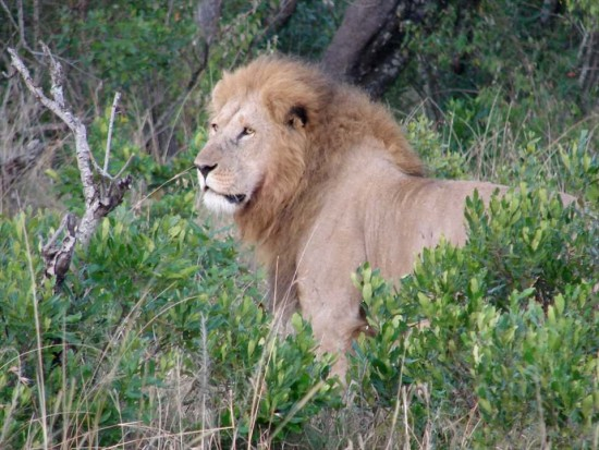 secluded safaris in africa (94)