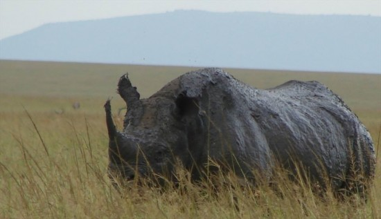 secluded safaris in africa (95)
