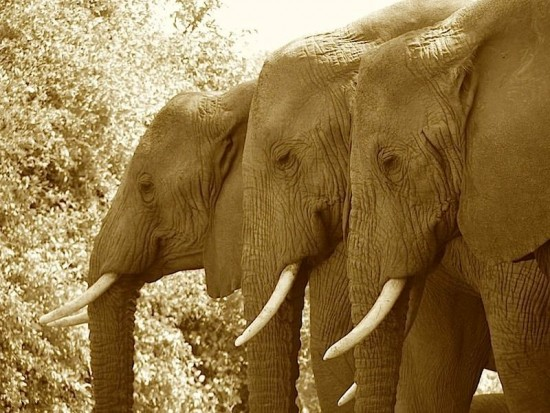 secluded safaris in africa (97)