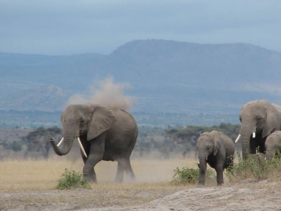 secluded_safaris_gallery_01