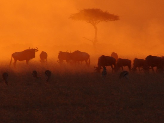 secluded_safaris_gallery_05