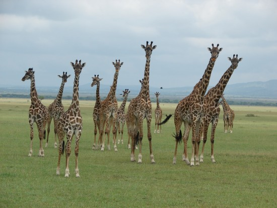 secluded_safaris_gallery_07