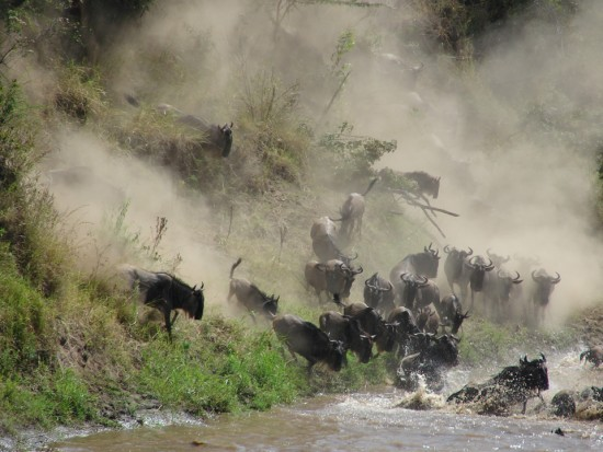 secluded_safaris_gallery_12