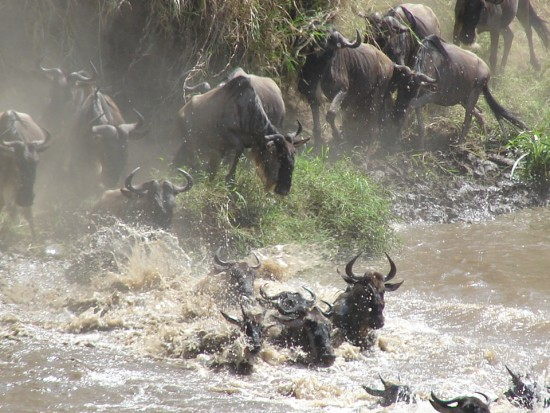 secluded_safaris_gallery_15