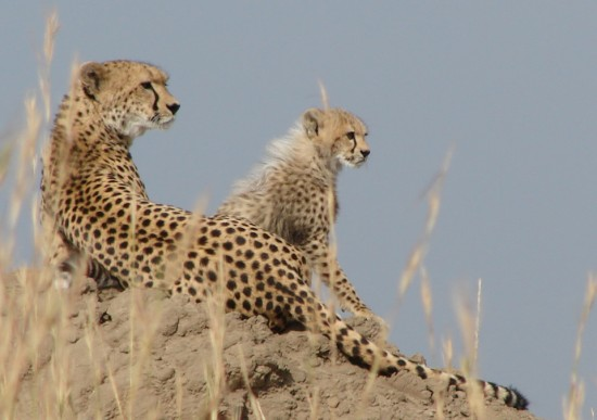 secluded_safaris_gallery_17