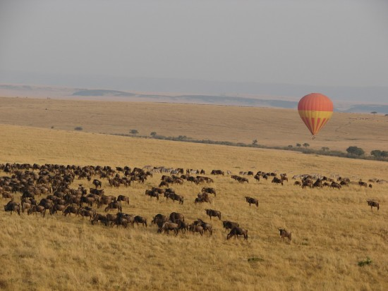 secluded_safaris_gallery_19