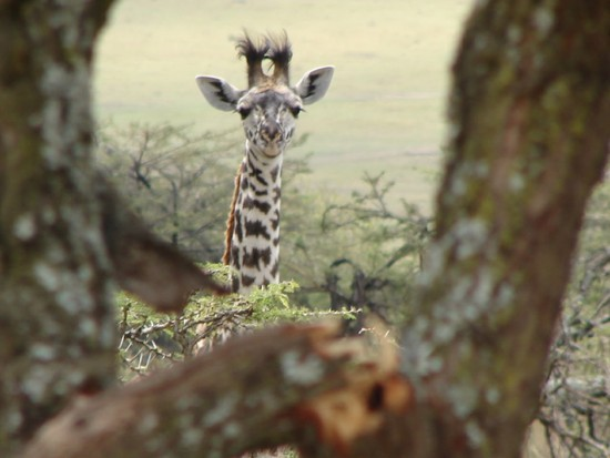 secluded_safaris_gallery_20
