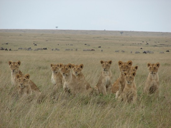 secluded_safaris_gallery_21