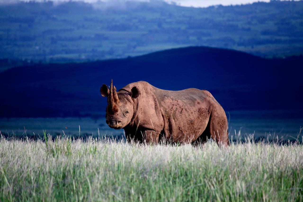 lewa_house_black_rhino