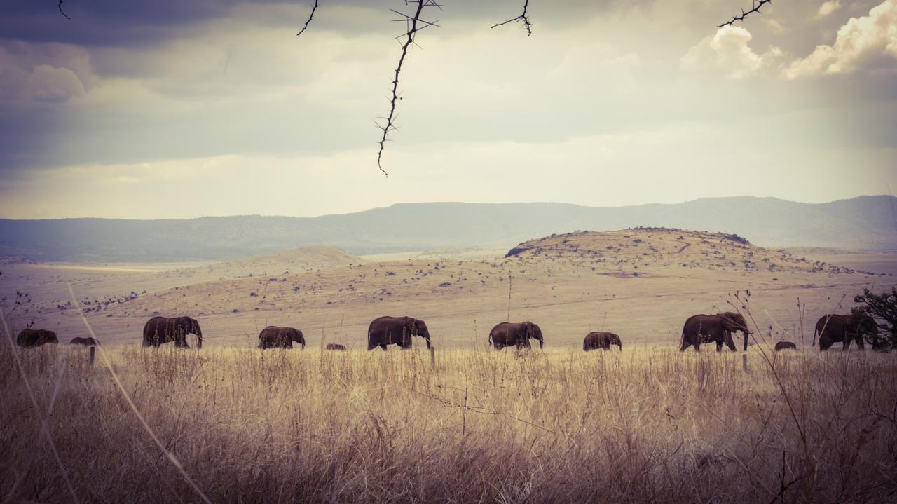 lewa_house_elephants
