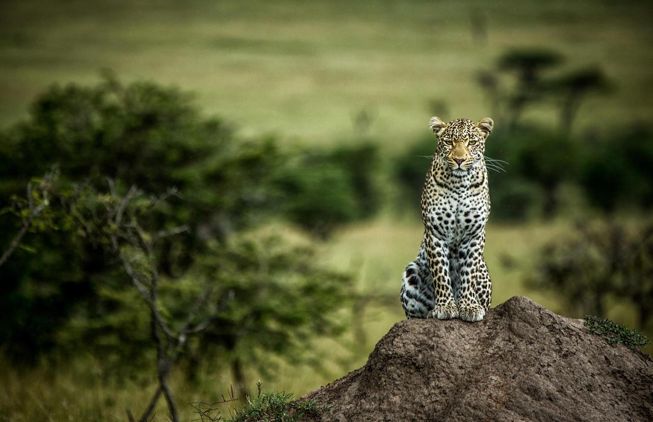 mara_plains_camp_leopard_rock