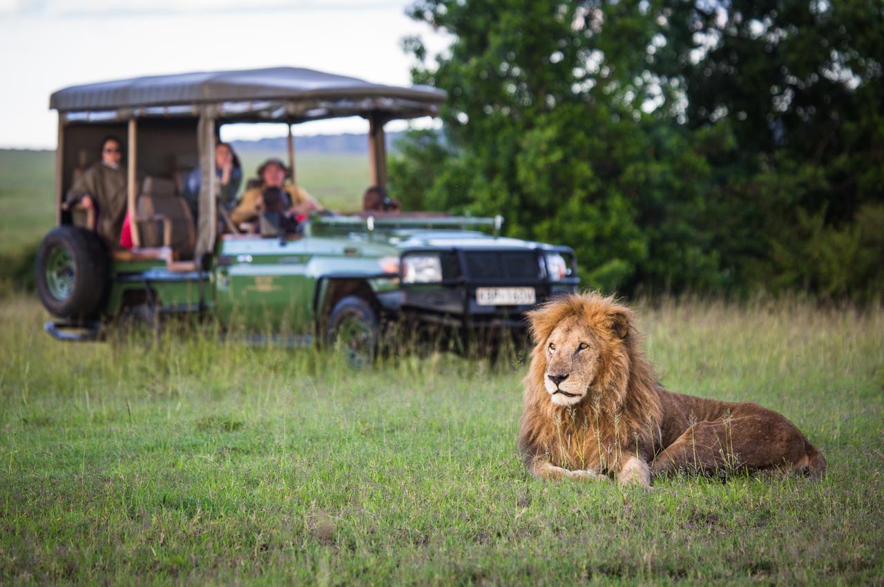 mara_plains_camp_wildlife