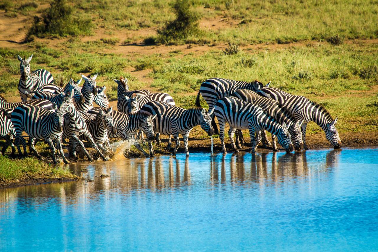 ol_donyo_zebra_waterhole
